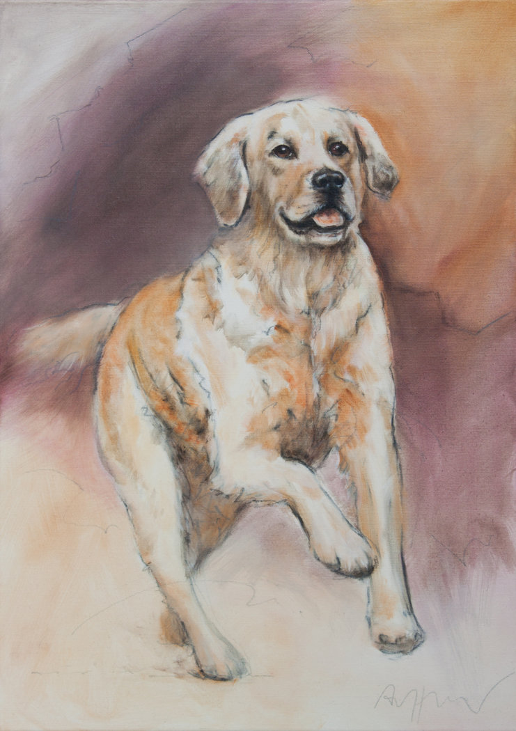 Thomas Aeffner - Golden Retriever