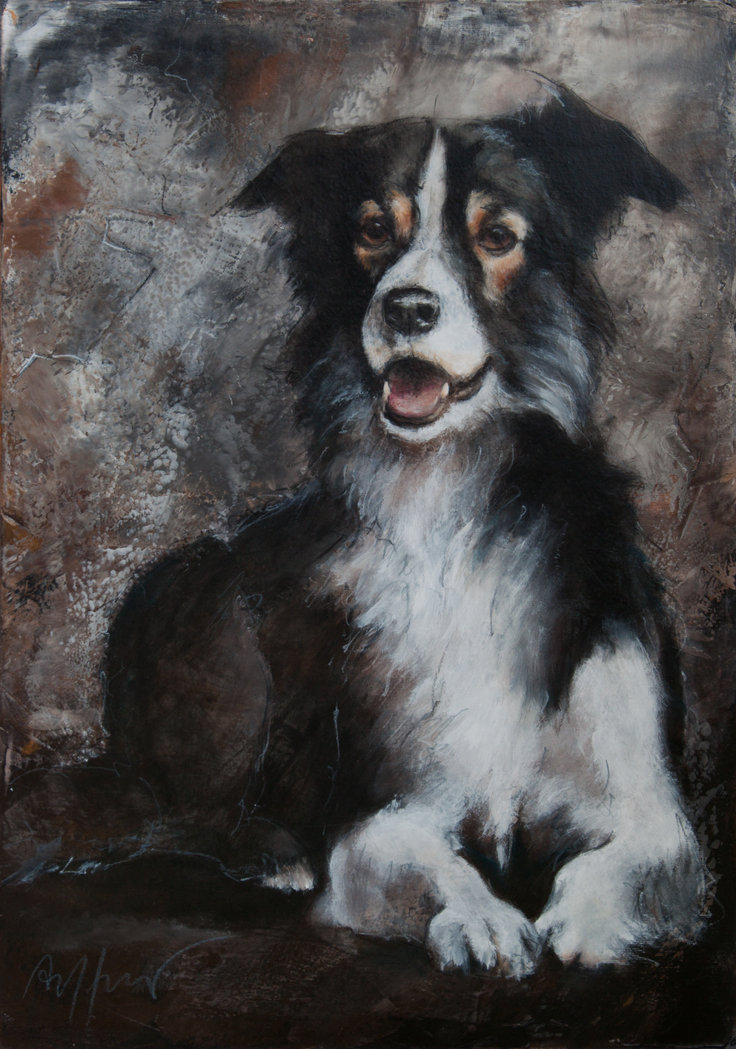 Thomas Aeffner - Border Collie